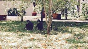 Affefamilie im Garten Lizenzfreie Stockfotografie