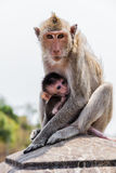 Affefamilie im Thailand Lizenzfreies Stockbild