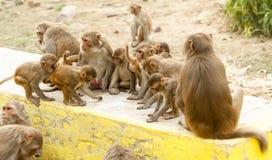 Affefamilie lustig in der Natur Lizenzfreie Stockfotos