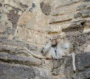 Affefamilie mit Baby auf ihrer Mutterumarmung Stockfotos