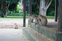 Affefamilie schauen, um zu reisen Stockbilder