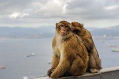 Affefamilie sitzt auf Balkon am Gibraltar-Felsenstandpunkt Lizenzfreie Stockfotografie