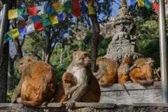 Affefamilie in Swayambhunath-Tempel Lizenzfreie Stockfotografie
