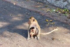 Affefamilie und Babyaffe Lizenzfreie Stockbilder