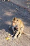 Affefamilie und Babyaffe Stockfotos