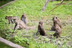 Affefamilie am Wasser Lizenzfreie Stockfotografie