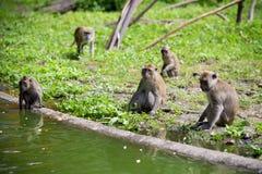Affefamilie am Wasser Stockfotos