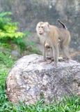 Affefamilie am Zoo Lizenzfreies Stockfoto