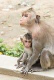 Affefamiliensitzen Stockfotografie