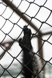Affehand auf Stangen des Gitters Lizenzfreie Stockbilder