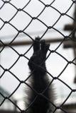 Affehand auf Stangen des Gitters Stockfoto