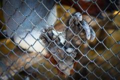 Affehandfinger im Metallnetz Selektiver Fokus Lizenzfreie Stockfotografie
