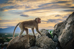 Affeleben in einem Naturwald Stockfotografie