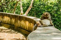 Affeleben in einem Naturwald Stockfoto