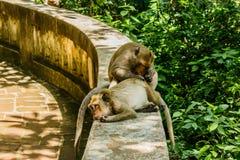 Affeleben in einem Naturwald Lizenzfreies Stockfoto