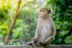 Affeleben in einem Naturwald von Thailand Stockbilder