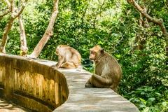 Affeleben in einem Naturwald von Thailand Lizenzfreie Stockbilder