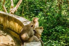 Affeleben in einem Naturwald von Thailand Stockfotos
