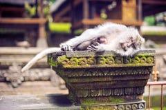 Affemakaken, der auf dem Stein stationiert Affetempel in Bali Stockfotografie