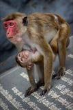 Affemutter die Kind Lizenzfreie Stockfotos