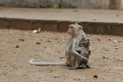 Affemutter, die sein Baby einzieht Stockfotos