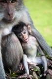 Affemutter mit ihrem Baby Lizenzfreies Stockfoto
