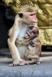 Affemutter mit Kind Lizenzfreies Stockfoto