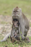 Affemutter mit Sohn - (Selektiver Fokus) Stockfoto