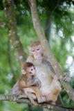 Affemutter streicheln ihr Kind Lizenzfreie Stockbilder