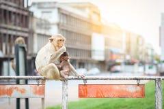 Affemutter und Baby Lopburi Thailand Lizenzfreie Stockfotos