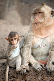 Affemutter und ihr Baby Lizenzfreie Stockfotografie