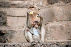 Affemutter und ihr Baby Lizenzfreies Stockfoto