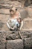 Affemutter und ihr Baby Lizenzfreie Stockbilder