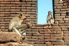 Affemutter und ihr Sohn Stockfoto
