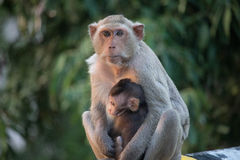 Affemutter und -kind Stockfotos