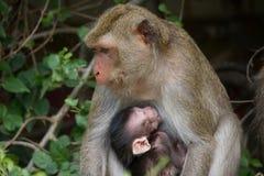 Affemutter und -kind Lizenzfreie Stockfotografie