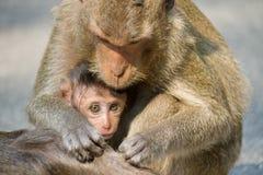 Affemutter und -kind Lizenzfreie Stockfotos