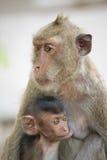Affemutter und -kind Lizenzfreie Stockbilder