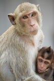 Affemutter und -kind Stockbilder