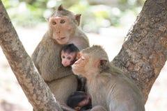 Affemutter und -kind Lizenzfreies Stockfoto