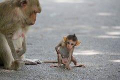 Affemutter und -kind Lizenzfreies Stockbild
