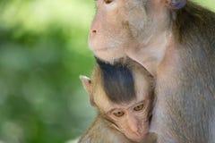 Affemutter und -kind Stockbild