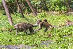 Affemutter und sein Babyentgehen Stockfotos