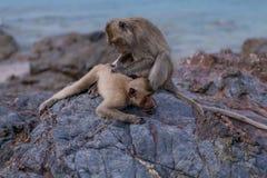 Affen Stockbilder