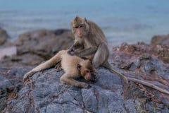 Affen Stockfotografie