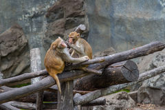 Affen auf Baum Affeporträt Stockfoto