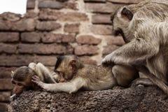 Affen auf den Altbauten Lizenzfreies Stockfoto