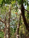 Affen auf den Bäumen Lizenzfreie Stockfotos