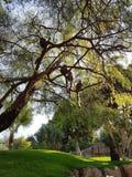 Affen auf den Bäumen Stockfotografie
