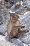 Affen auf den Stränden von Thailand Lizenzfreies Stockbild